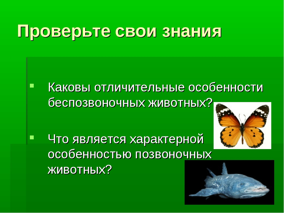 Проверьте свои знания Каковы отличительные особенности беспозвоночных животны...