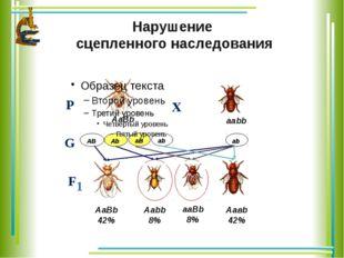 аb аВ Аb АВ Нарушение сцепленного наследования Р Х F 1 G аb АаВb ааbb АаВb 4