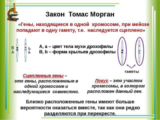 Закон Томас Морган «Гены, находящиеся в одной хромосоме, при мейозе попадают...