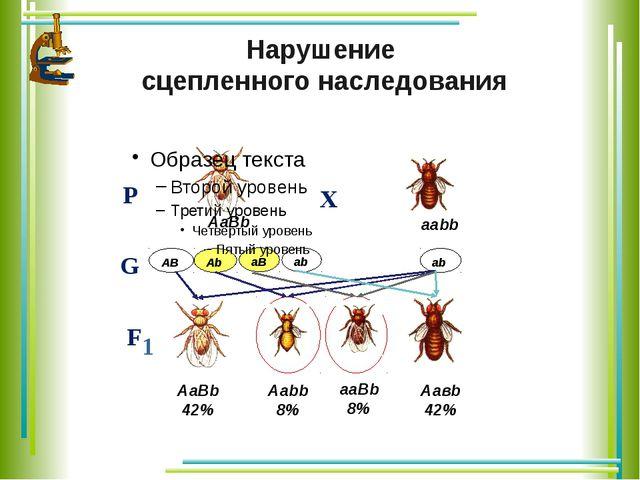 аb аВ Аb АВ Нарушение сцепленного наследования Р Х F 1 G аb АаВb ааbb АаВb 4...