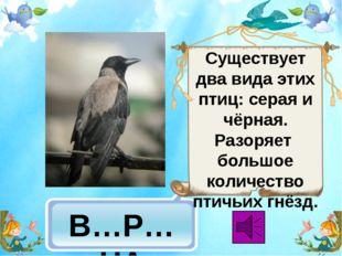 В…Р…НА Существует два вида этих птиц: серая и чёрная. Разоряет большое колич