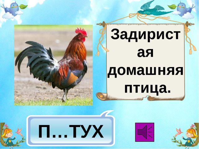 П…ТУХ Задиристая домашняя птица.