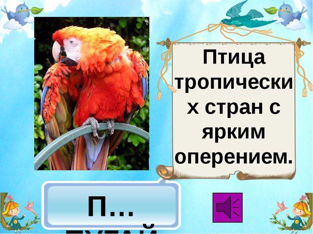 П…ПУГАЙ Птица тропических стран с ярким оперением.
