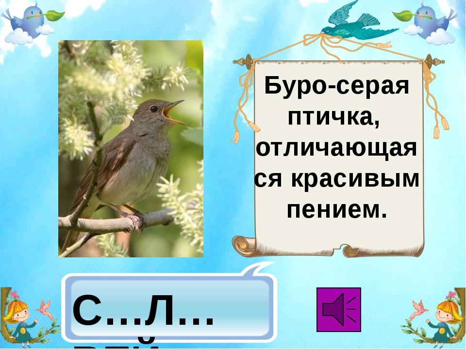 Буро-серая птичка, отличающаяся красивым пением. С…Л…ВЕЙ