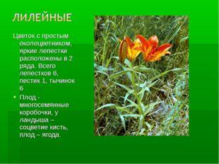 Цветок с простым околоцветником, яркие лепестки расположены в 2 ряда. Всего л