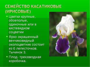 Цветки крупные, обоеполые, одиночные или в кистевидном соцветии Ярко окрашенн