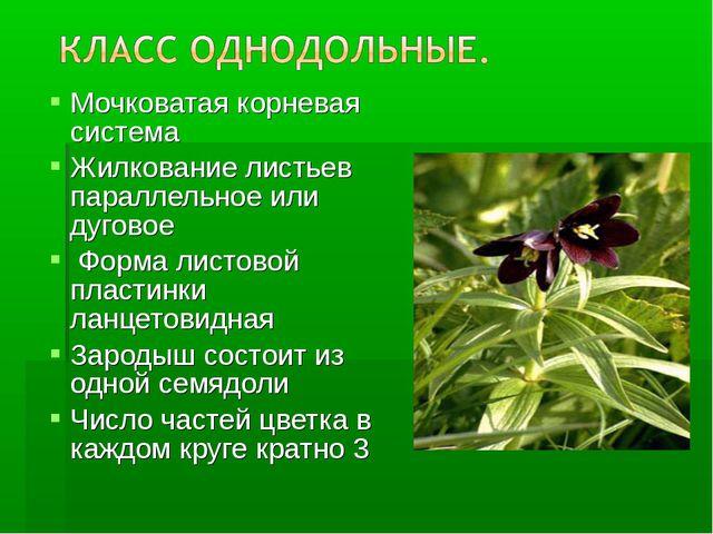 Мочковатая корневая система Жилкование листьев параллельное или дуговое Форма...