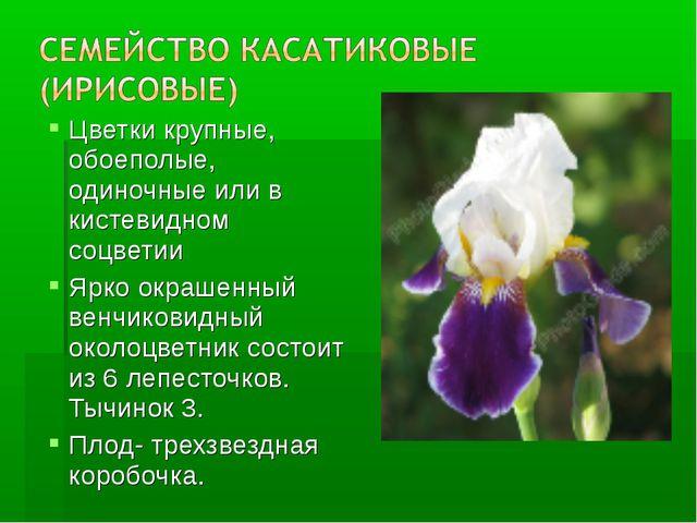 Цветки крупные, обоеполые, одиночные или в кистевидном соцветии Ярко окрашенн...