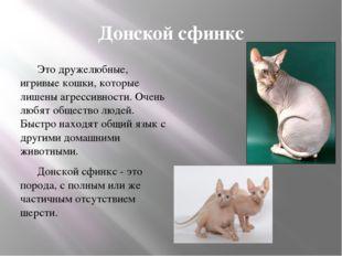 Донской сфинкс Это дружелюбные, игривые кошки, которые лишены агрессивности.