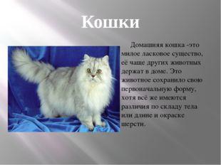 Кошки . Домашняя кошка -это милое ласковое существо, её чаще других животных