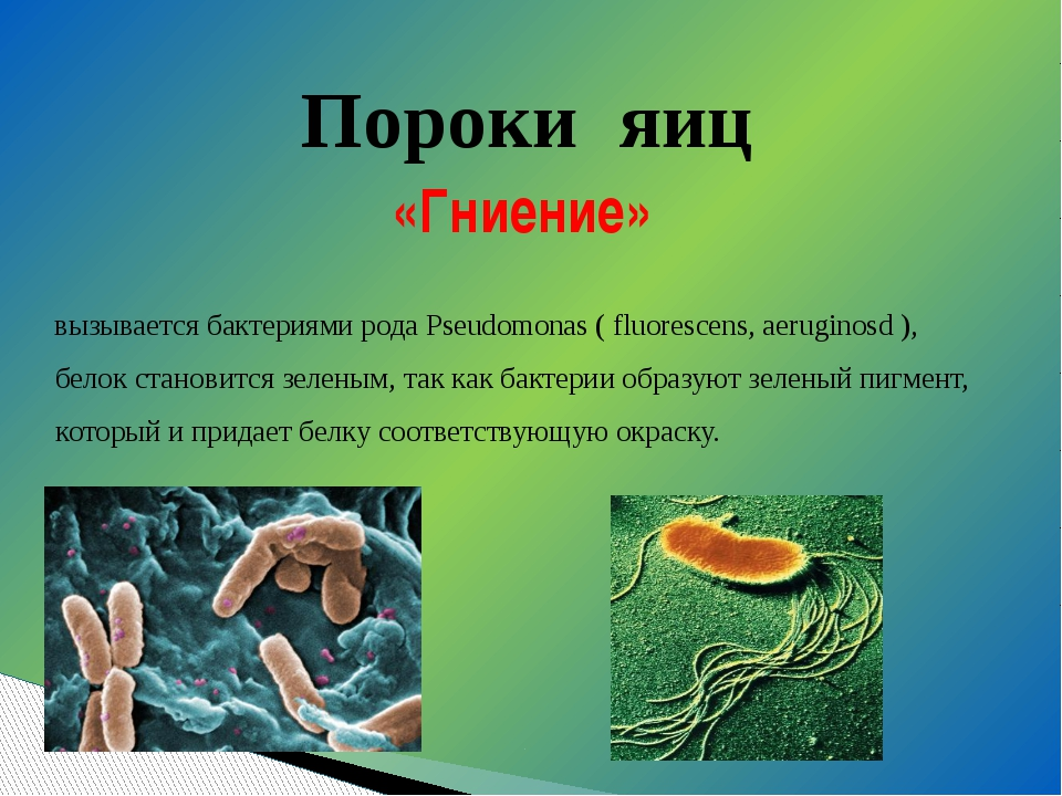 вызывается бактериями рода Pseudomonas ( fluorescens, aeruginosd ), белок ста...