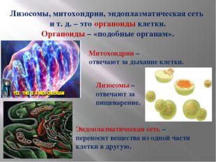 Лизосомы, митохондрии, эндоплазматическая сеть и т. д. – это органоиды клетки