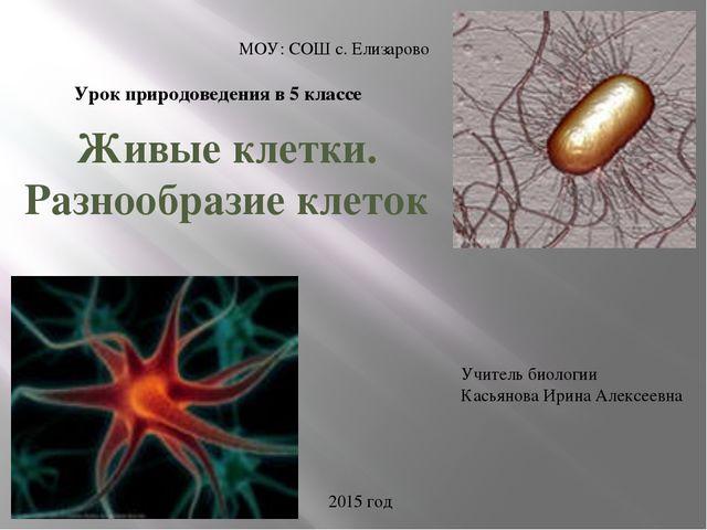 Живые клетки. Разнообразие клеток МОУ: СОШ с. Елизарово Учитель биологии Кась...