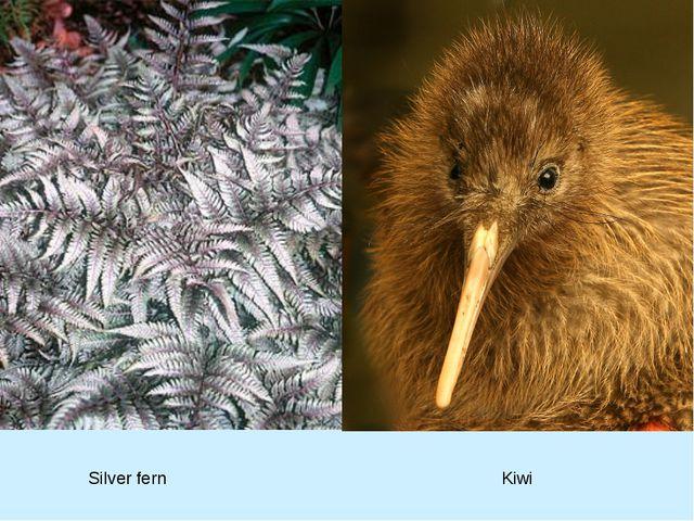 Kiwi Silver fern