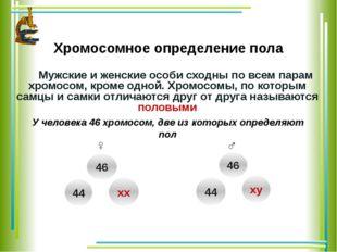 Хромосомное определение пола Мужские и женские особи сходны по всем парам хр