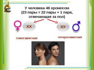 У человека 46 хромосом (23 пары = 22 пары + 1 пара, отвечающая за пол) ХХ ХУ