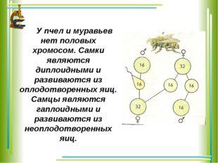 У пчел и муравьев нет половых хромосом. Самки являются диплоидными и развива