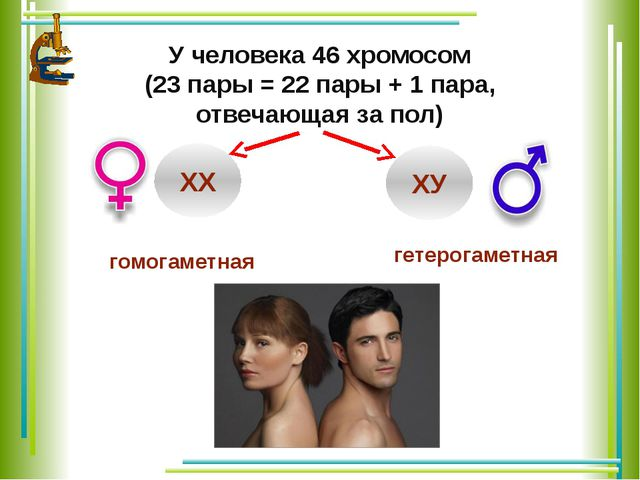 У человека 46 хромосом (23 пары = 22 пары + 1 пара, отвечающая за пол) ХХ ХУ...