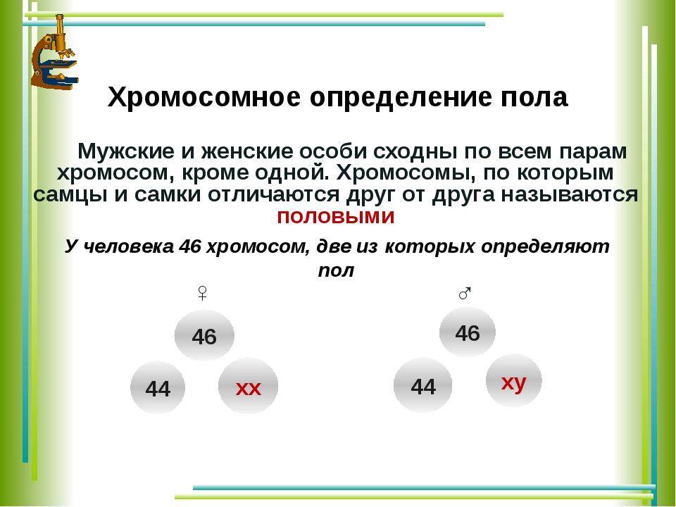 Хромосомное определение пола Мужские и женские особи сходны по всем парам хр...