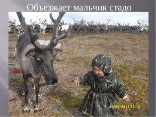Объезжает мальчик стадо