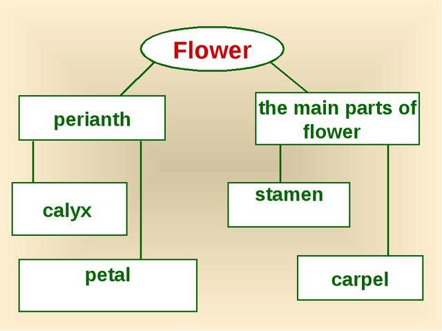 Flower perianth the main parts of flower calyx petal stamen carpel