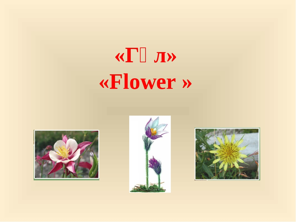 «Гүл» «Flower »