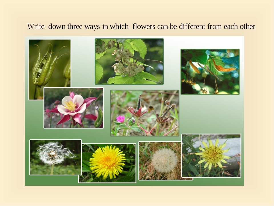 Write down three ways in which flowers can be different from each other