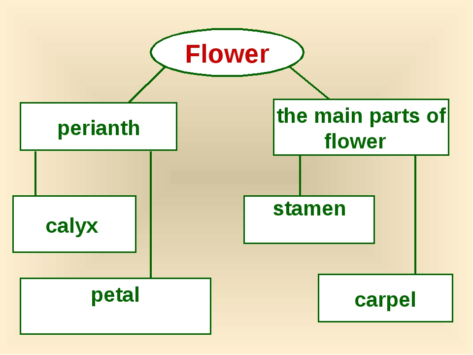 Flower perianth the main parts of flower calyx petal stamen carpel