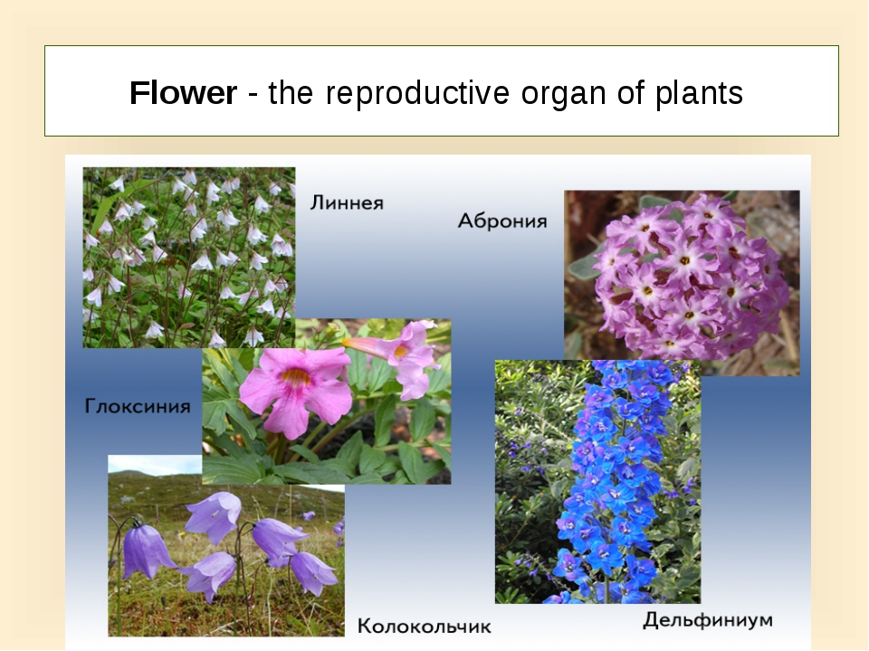 Flower - the reproductive organ of plants
