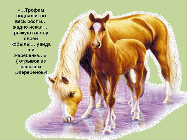 «…Трофим поднялся во весь рост и…жадно искал …рыжую голову своей кобылы….увид...