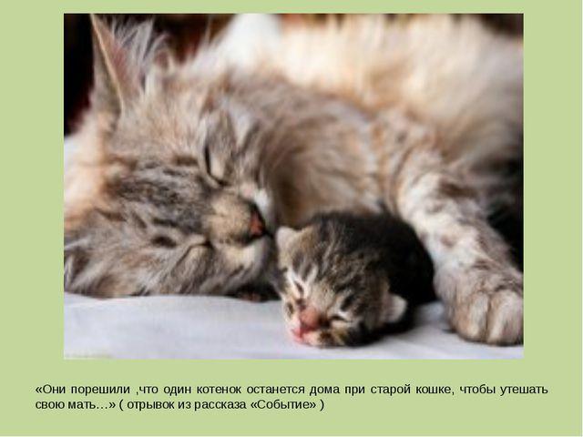 «Они порешили ,что один котенок останется дома при старой кошке, чтобы утешат...
