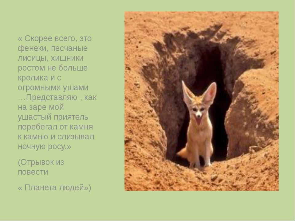 « Скорее всего, это фенеки, песчаные лисицы, хищники ростом не больше кролик...