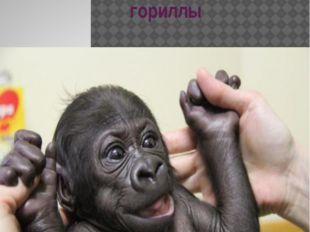 Малыш гориллы