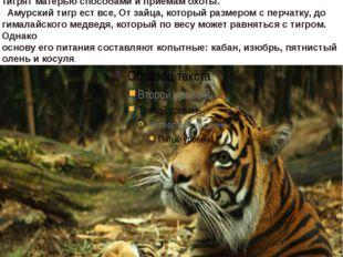 Тигры в последнее время становятся настоящей редкостью Молодые тигры живут с