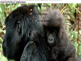 гориллы неплохо лазают по деревьям, особенно молодые особи они употребляют