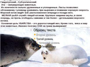 Морские котики— подсемействоушастых тюленей, Южноамериканский ,Новозеландс