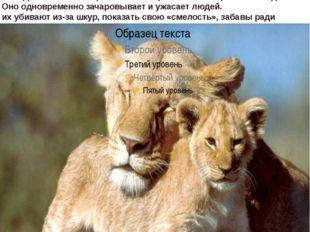 лев хищноемлекопитающее. Самцы не только значительно крупнее самок, но и о