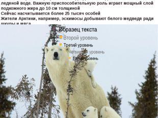белый илиполярный медведьживет в Арктике она представляет собой ледяные п