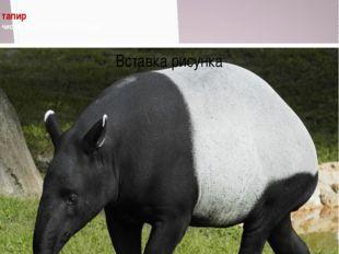 тапир численность около 500 особей Численность около 500 особей Численность
