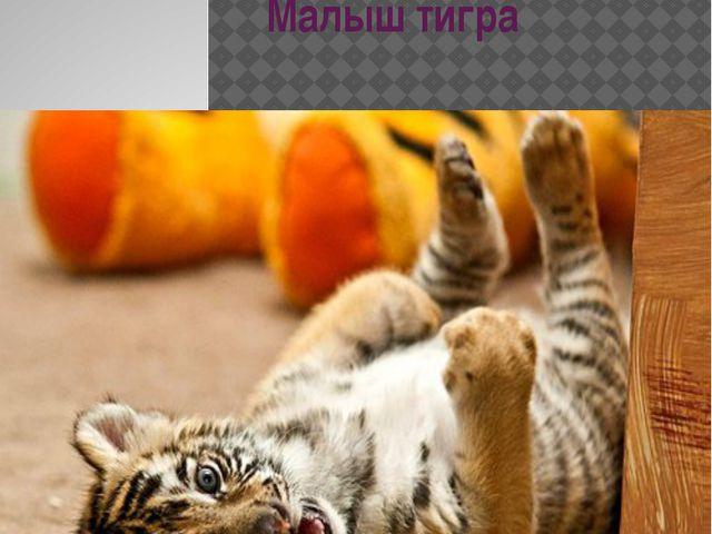 Малыш тигра