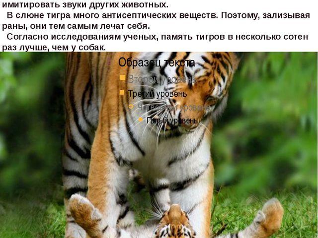 тигр без еды может обходиться около недели, но за один прием съедает около 30...