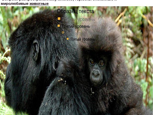 гориллы неплохо лазают по деревьям, особенно молодые особи они употребляют...