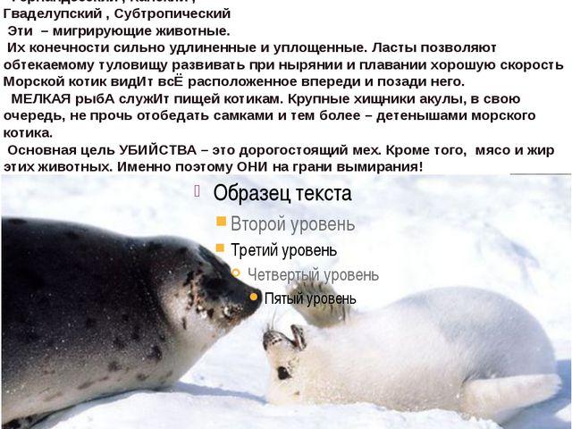 Морские котики— подсемействоушастых тюленей, Южноамериканский ,Новозеландс...