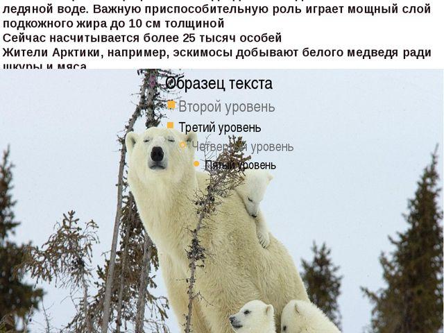 белый илиполярный медведьживет в Арктике она представляет собой ледяные п...