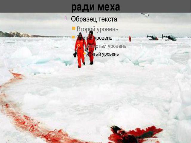 Это кровь морских котиков убитых ради меха