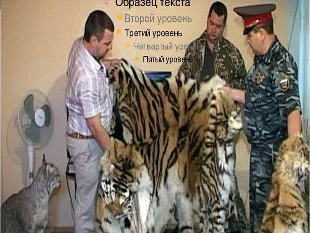 тигров мало осталось на планете кому-то всё равно