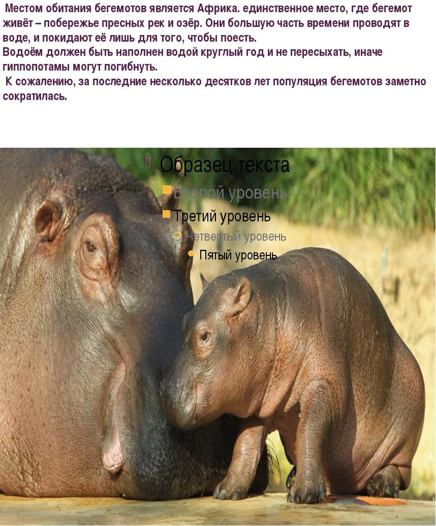 Местом обитания бегемотов является Африка. единственное место, где бегемот ж...
