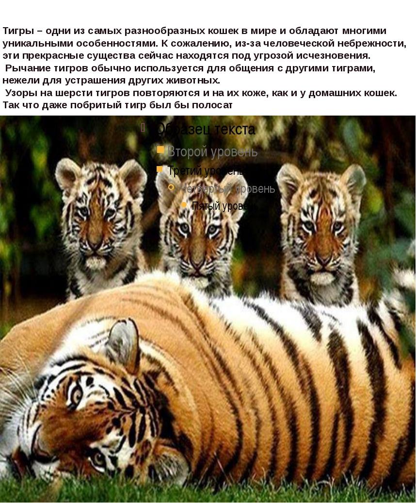 Тигры – одни из самых разнообразных кошек в мире и обладают многими уникальны...