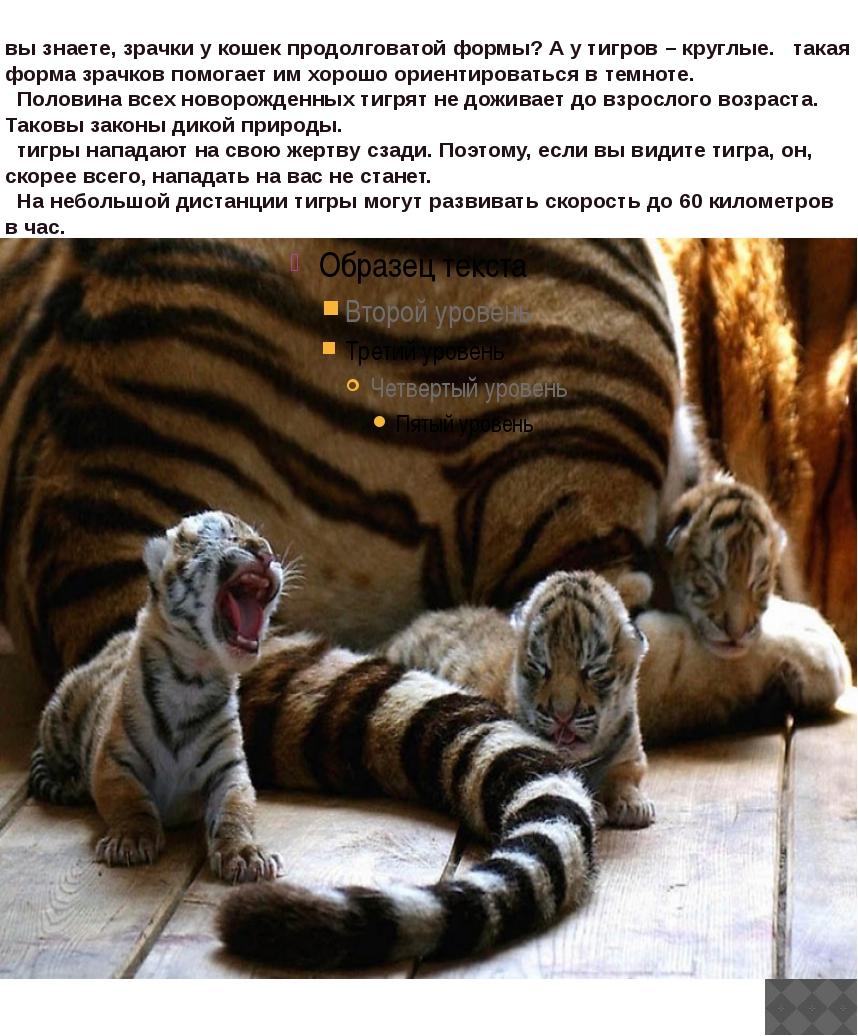 вы знаете, зрачки у кошек продолговатой формы? А у тигров – круглые. такая...