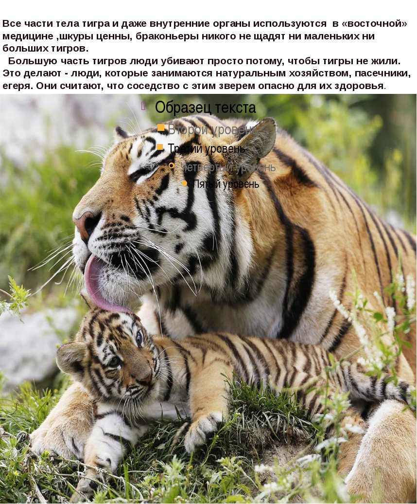 Все части тела тигра и даже внутренние органы используются в «восточной» меди...